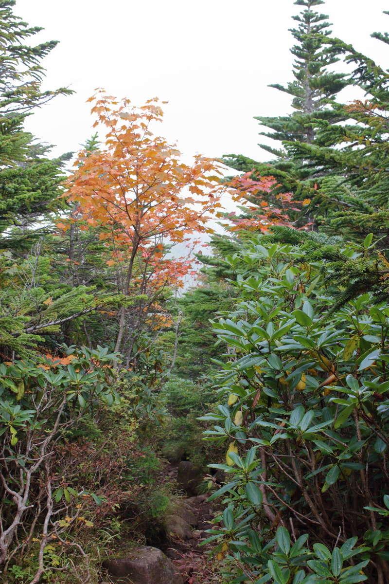 低木に囲まれた狭い登山道を下る