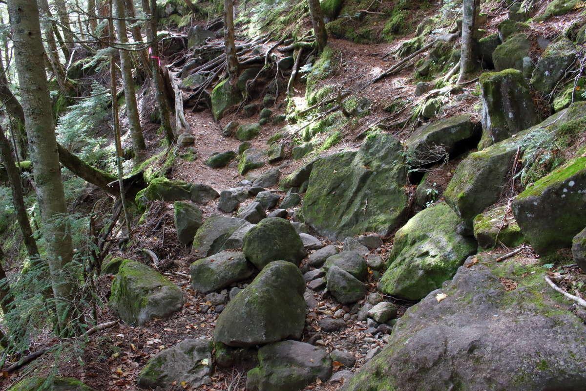 岩が多いながら傾斜は緩やかで歩きやすくなってきます