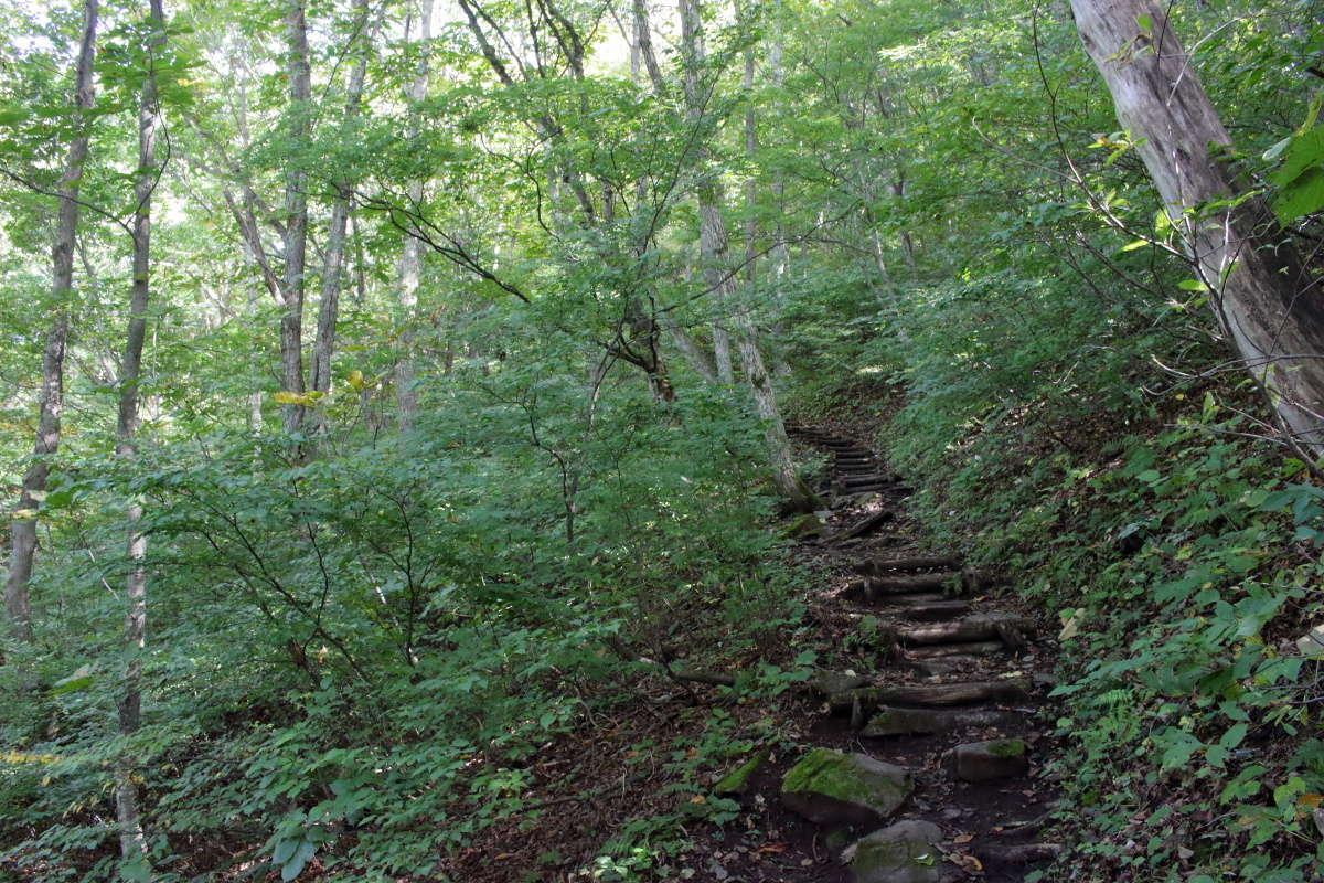 平標登山口から松出山へのルートは階段が整備されています