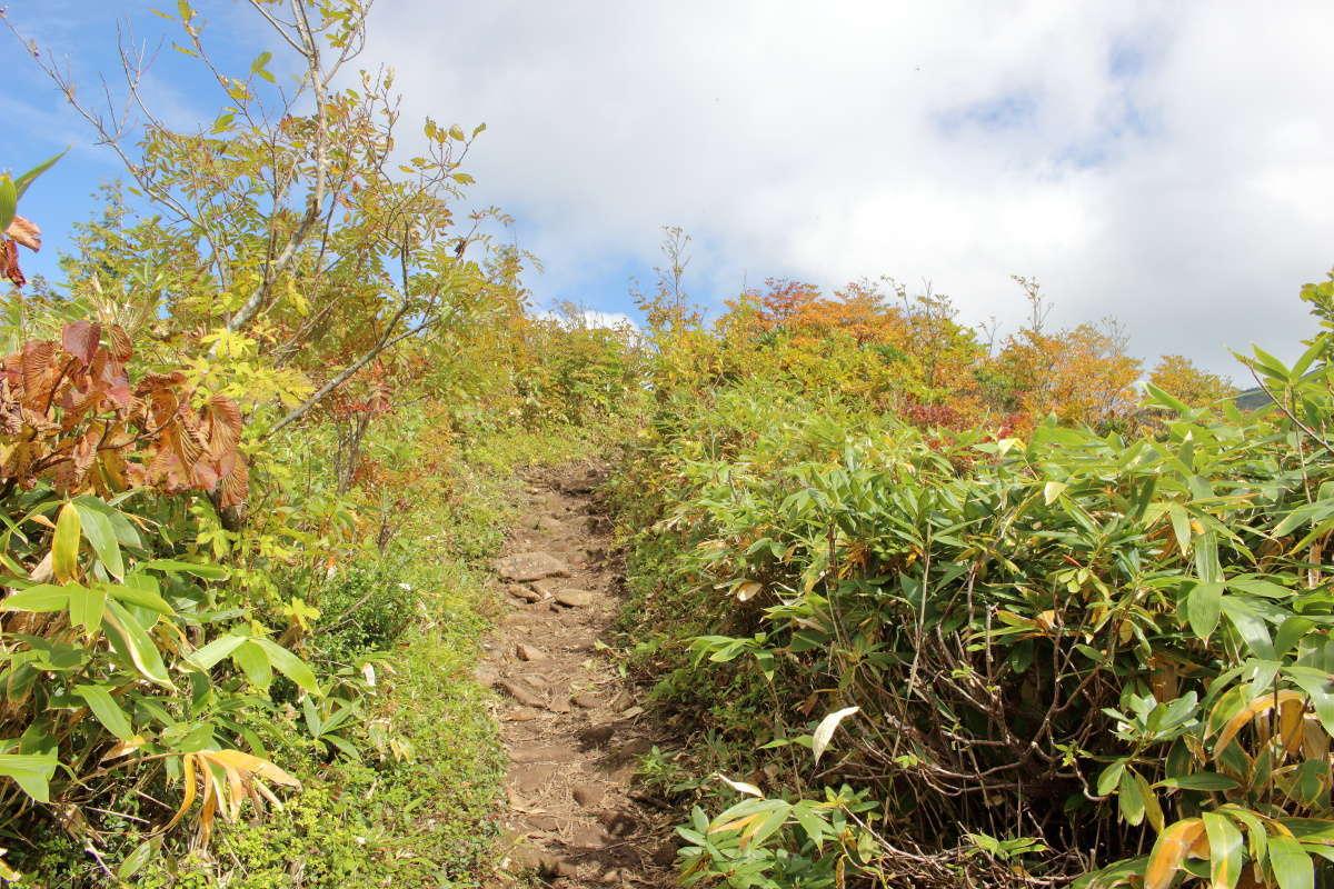 登山口から1時間ちょっとで樹林帯を抜け眺望が開けたところへ
