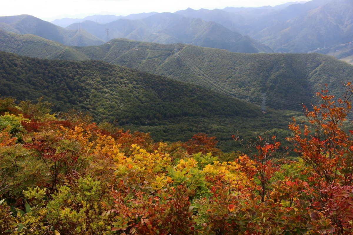 標高を上げるにつれ色づいている低木が多くなります