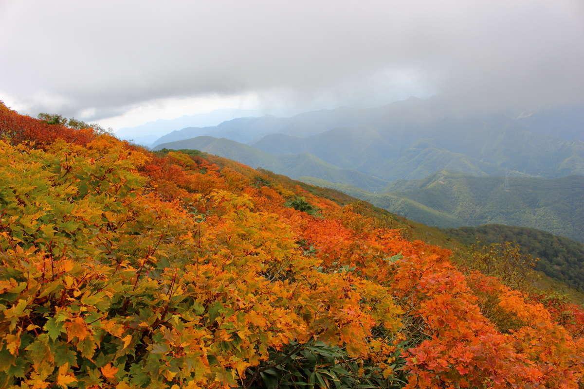平標山山頂直下は紅葉真っ盛り!