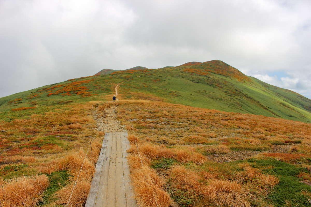仙ノ倉山への稜線は低木もなく草紅葉が見事!