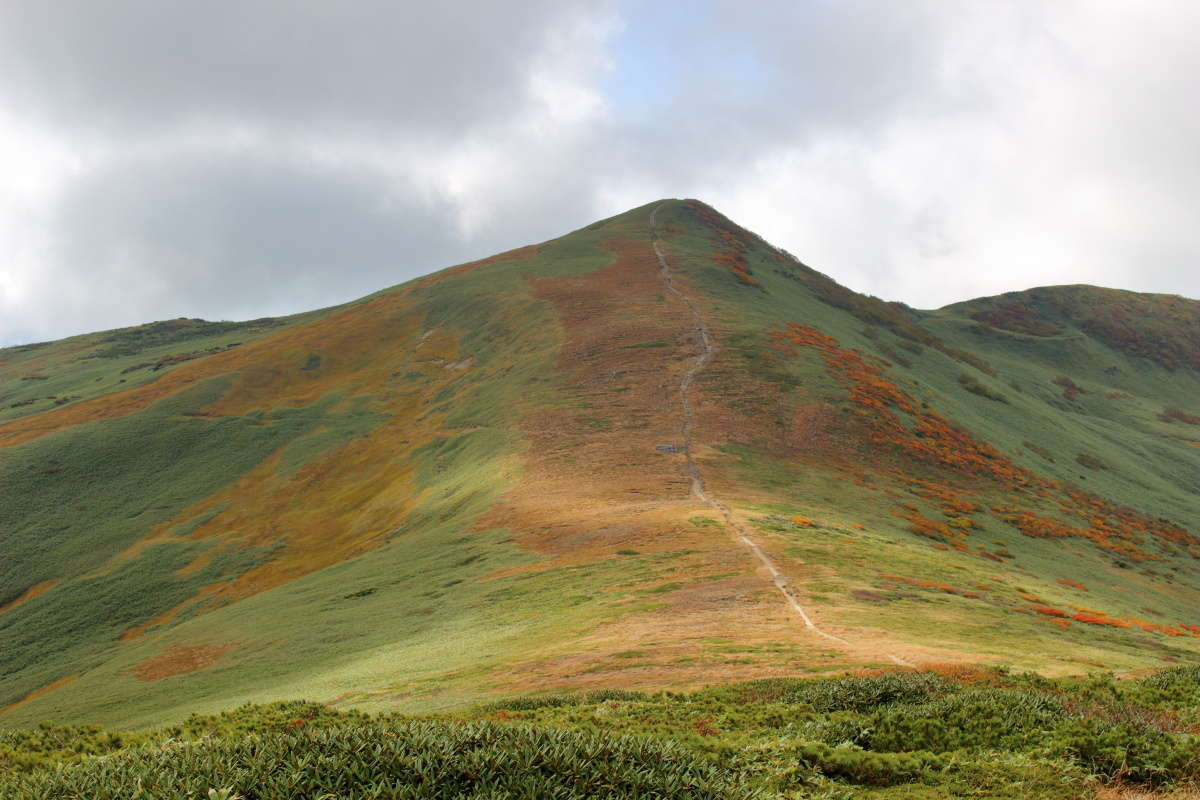 平標山へと続く稜線の登山道、本当に「真っすぐ」です