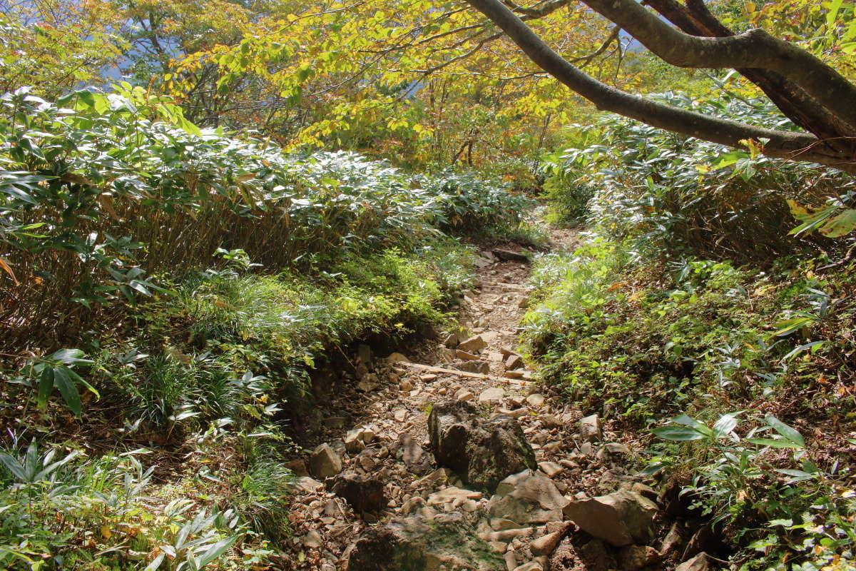 平標山の家からの下山は「平元新道」経由