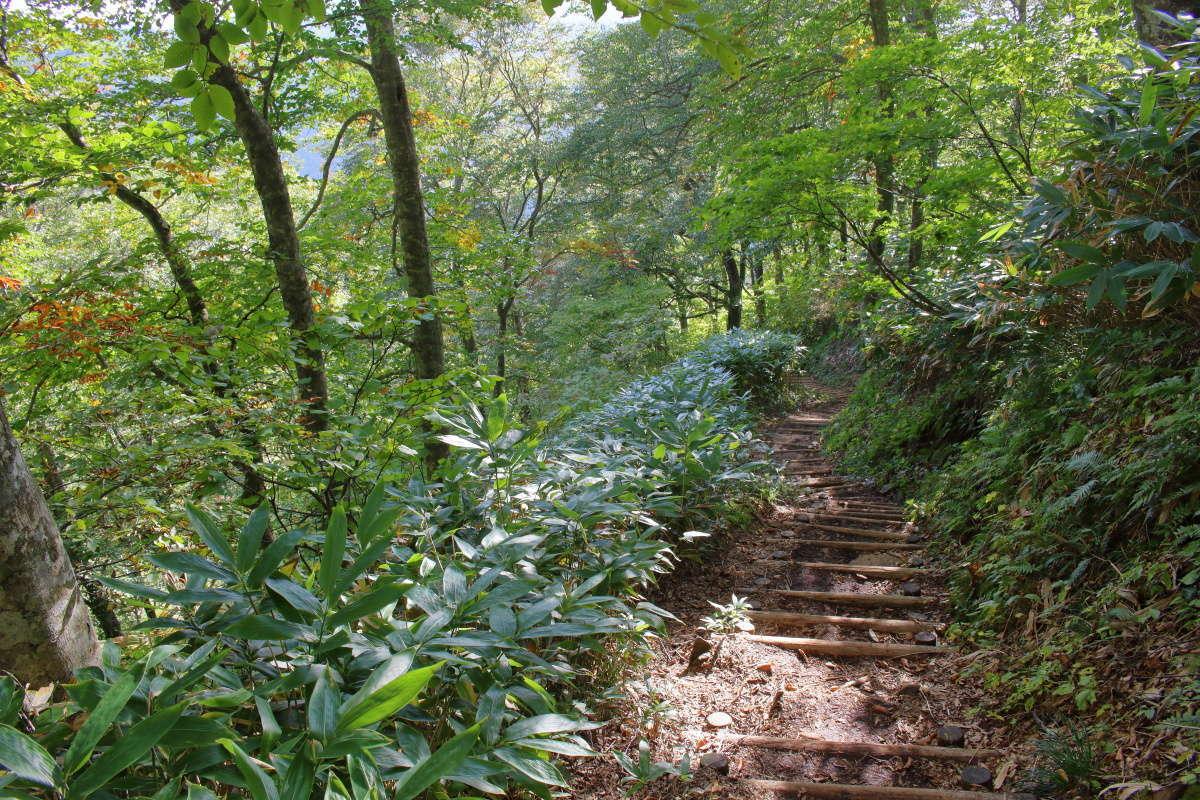 「平元新道」は階段が整備された歩きやすい登山道