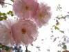 f:id:l-garden:20191109181750j:plain