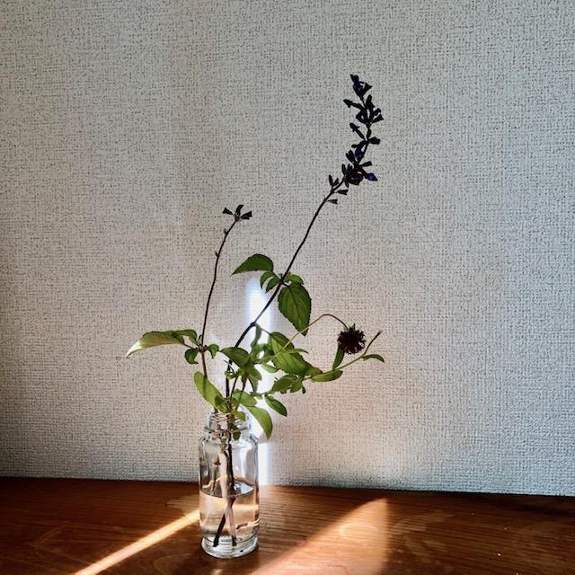 f:id:l-garden:20191110170138j:plain