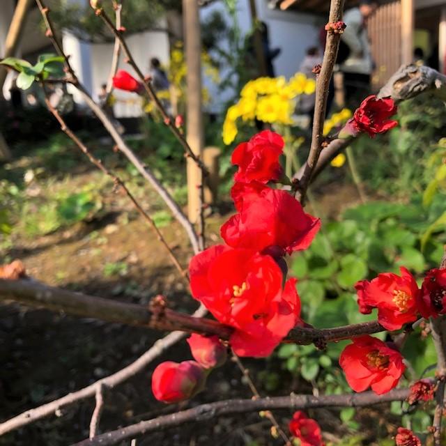 f:id:l-garden:20191205211805j:plain