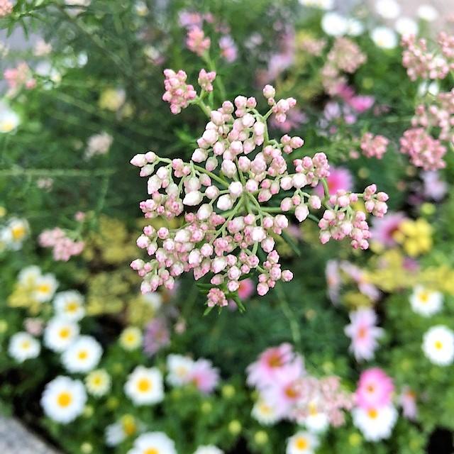 f:id:l-garden:20200303152538j:plain