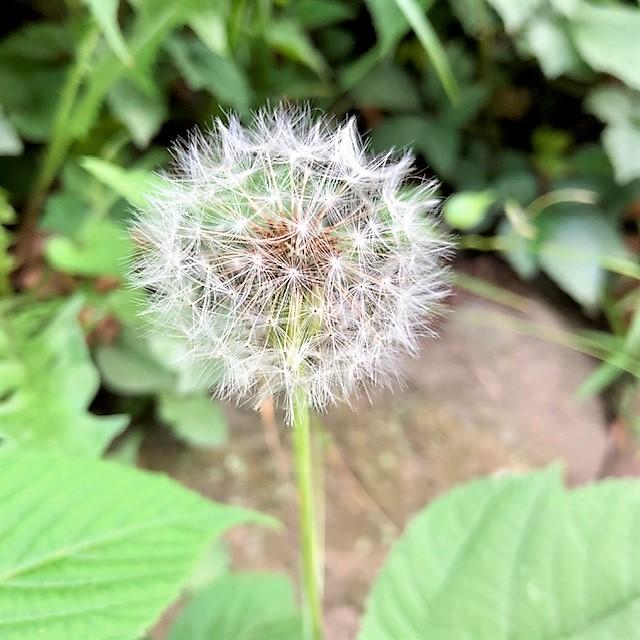 f:id:l-garden:20200607160850j:plain