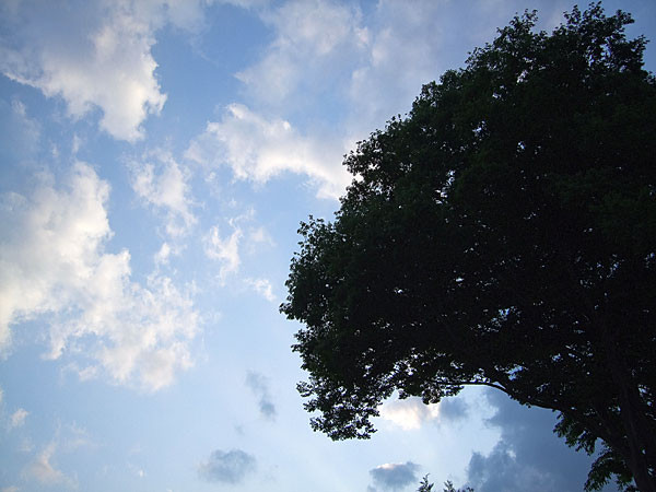 f:id:l_ange_dechu:20080527014132j:image