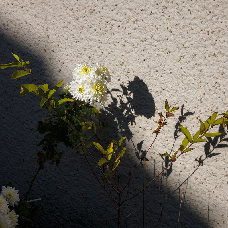 f:id:l_ange_dechu:20141111032928j:image