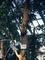 1903_京都府立植物園