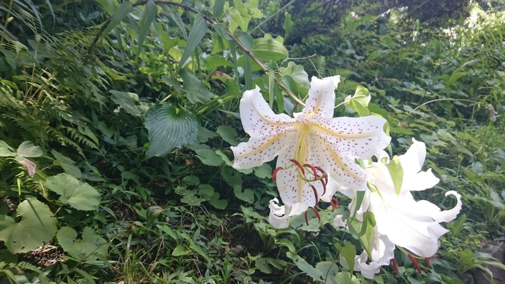 f:id:lacucaracha:20150725104011j:plain