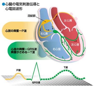 心臓の電気刺激伝導と心電図波形