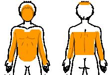 発疹が出やすい体の部位