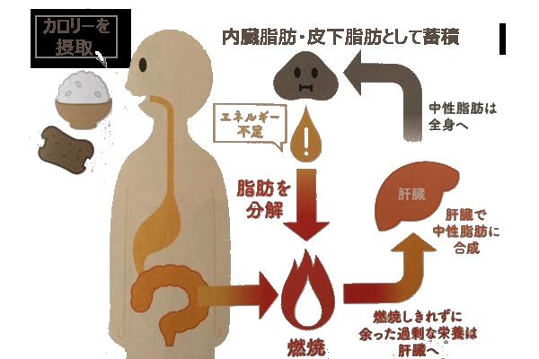 diet_from_toda今日からダイエット!サプリ届き今度こそシボヘール(脂肪減る)