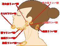 顔には多くのリンパ節があります