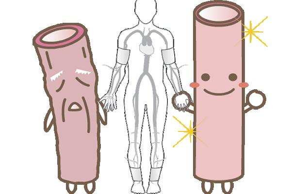 血管の老化を防ぐ!動脈硬化検査で血管の詰まりや硬さ危険因子を発見