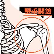 懸垂関節の構造