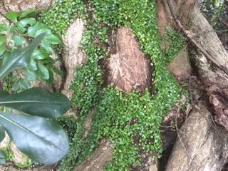 境内の古樹木