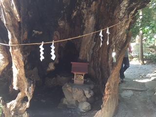 第二大楠 樹齢1300年超
