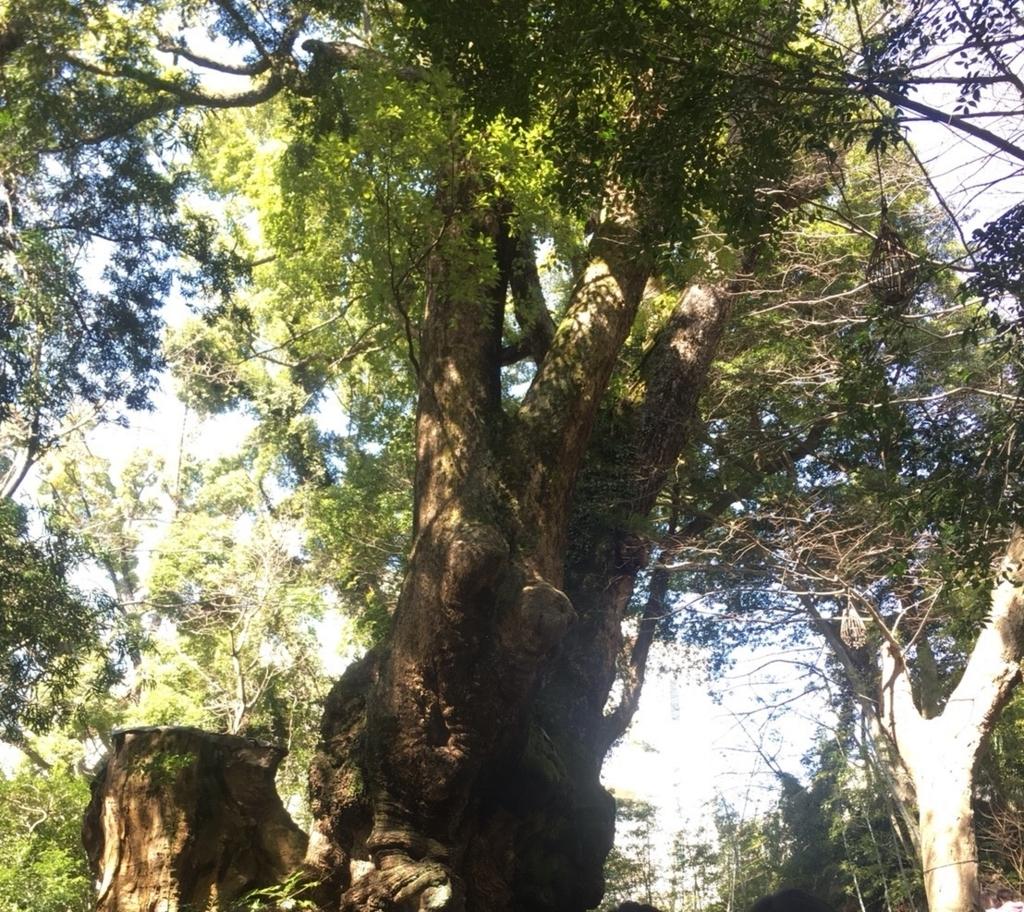 御神木 国指定天然記念物 大楠 樹齢2000年超