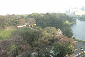 春霞(?)半蔵門の手前の桜は少し残っていました