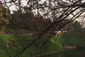 半蔵門を公園から見たところ。満開の時期は桜の間から見えます。