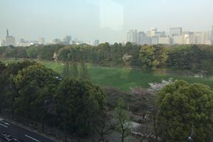 ビルの上から千鳥ヶ淵方面。いつもはくっきり見えるスカイツリーが霞んでいました、