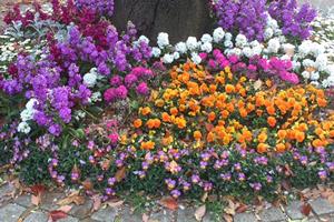 公園内の桜の根本の花壇