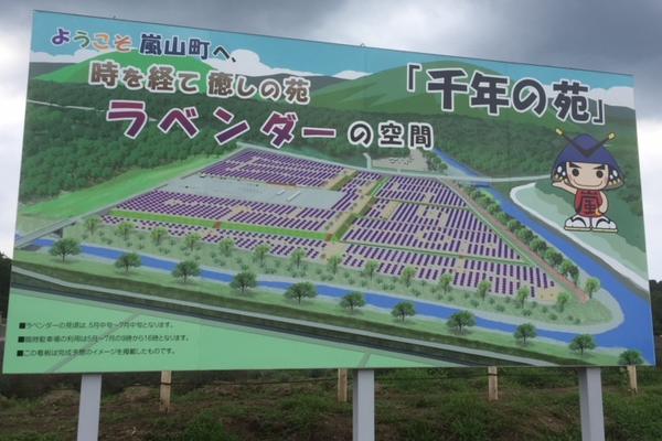 嵐山町「千年の苑ラベンダー園」は日本最大級の面積で来年オープン!