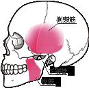 口を大きく開けるのに、様々な筋肉、中でも咬筋、側頭筋と関節円板が複雑に動いています。