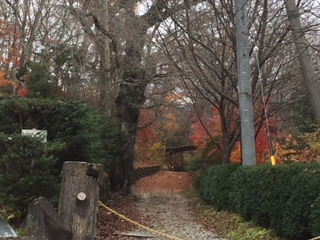 林の中の小道と道標