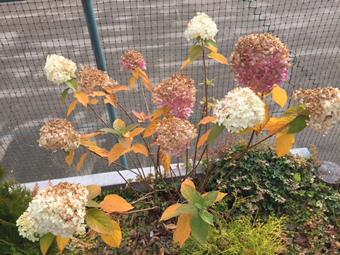 駐車場の花