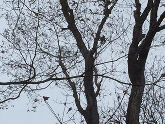 小鳥がたくさん!1羽だけ写真に収められました!どこにいるかわかるかな?