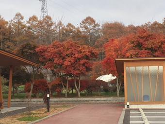 駐車場から紅葉