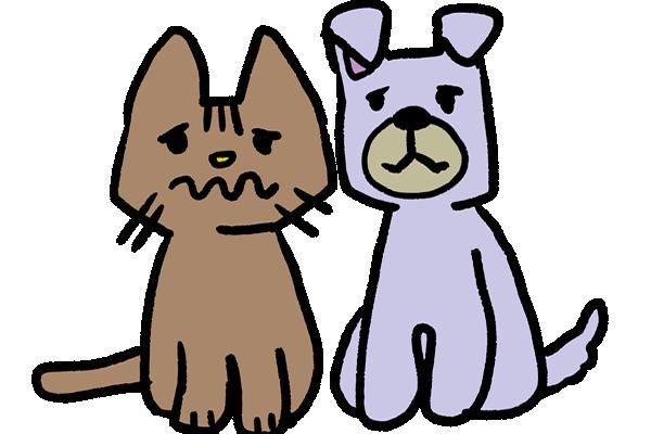 保護犬、保護猫もっと知ってほしい譲渡のこと~新しい家族との出会いを