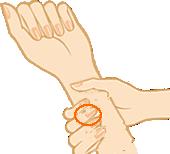 正しい脈の測り方