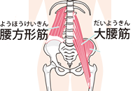 お腹の深部にある腰方形筋