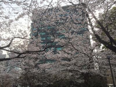 内堀通りを挟んで(右側にちらっと見えているビルの1Fに東京MXテレビ)