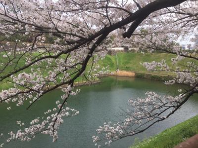 桜の間に半蔵門