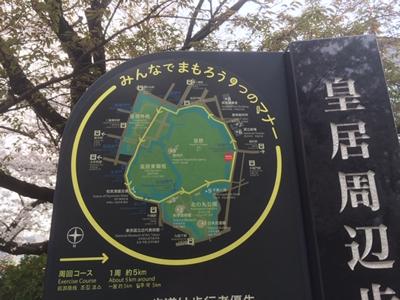皇居ランナーも多いですね。1周約5kmのコースです。