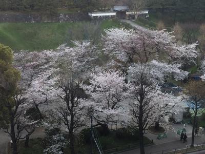 お花見の会場から千鳥ヶ淵公園、半蔵門を望む