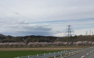 都幾川桜堤のどかな田園風景