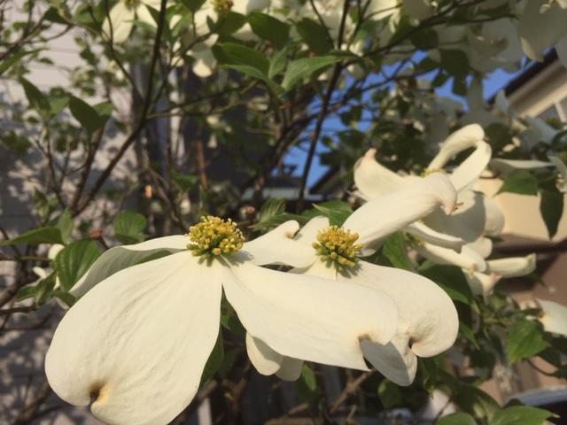 ご近所の花巡り散歩写真集~春の花たちと初夏のきざし