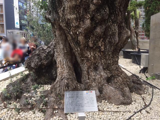 展示販売しているそうです。左はオリーブの木。