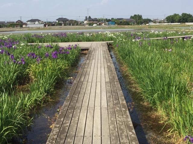 菖蒲園遊歩道