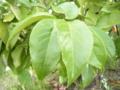 f:id:lagurus:20120806150144j:image:medium:left